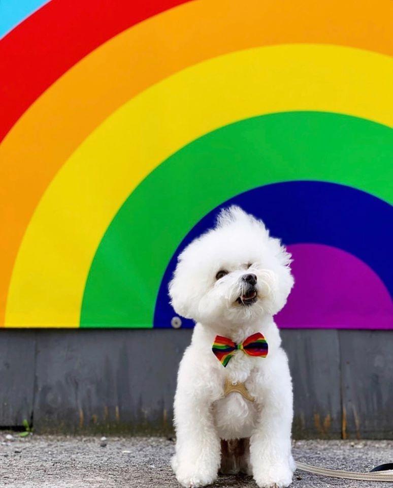 Pride hund