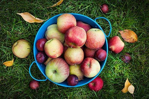 en hink fylld med äpplen och plommon på en gräsmatta