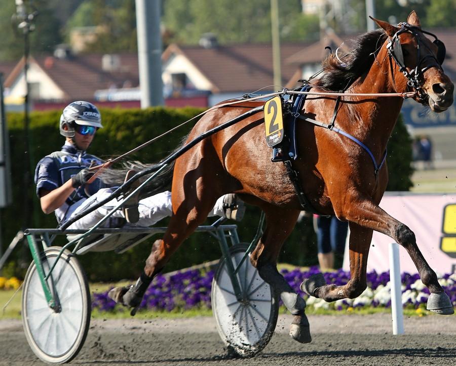 OJA Racing tränar både varmblod och kallblod i Sala. Oskar J Andersson är travtränare.