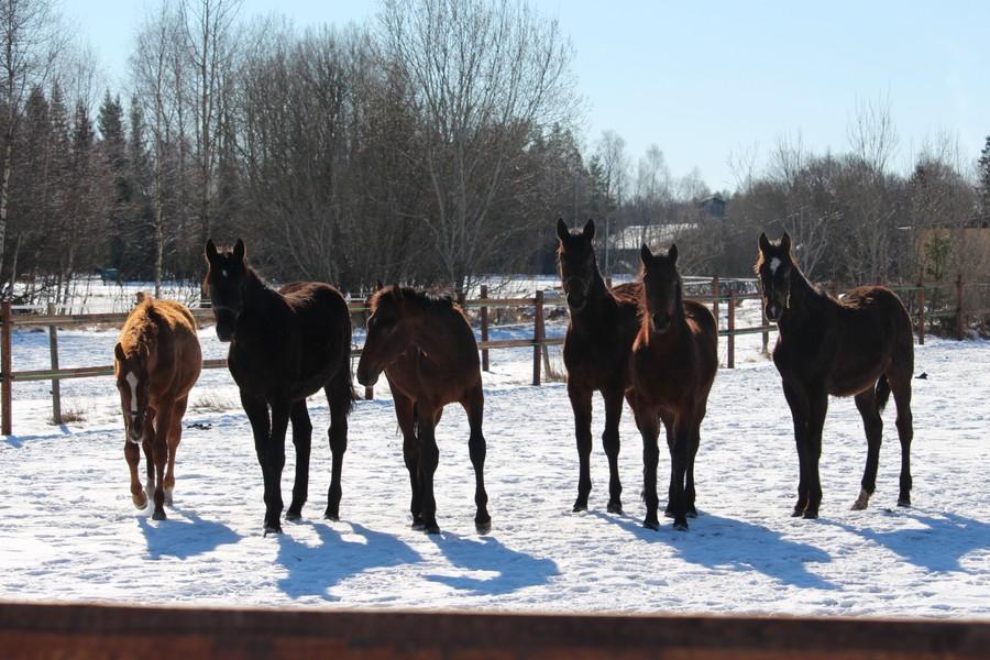 Harmoni för hästarna hos OJA Racing. Kanske är det dags att bli hästägare?