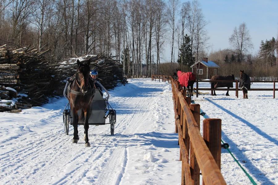 OJA Racing håller till i Sala och bedriver träning och tävling med travhästar.