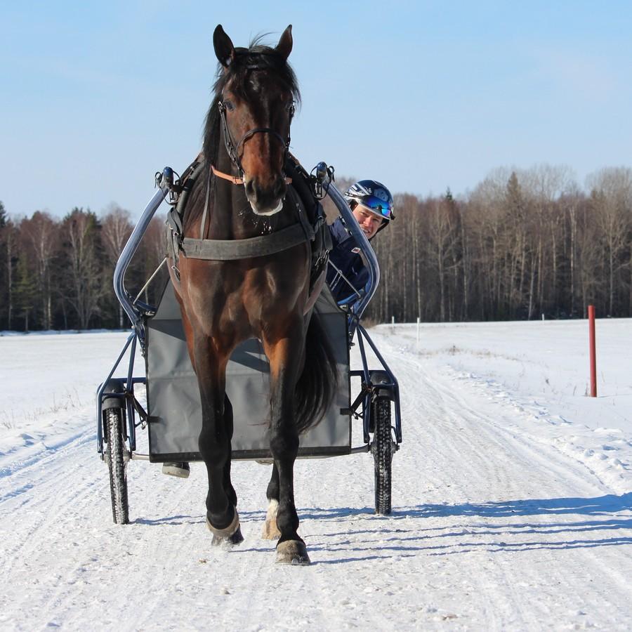 Travhästarna ska trivas och må bra hos OJA Racing i Sala.