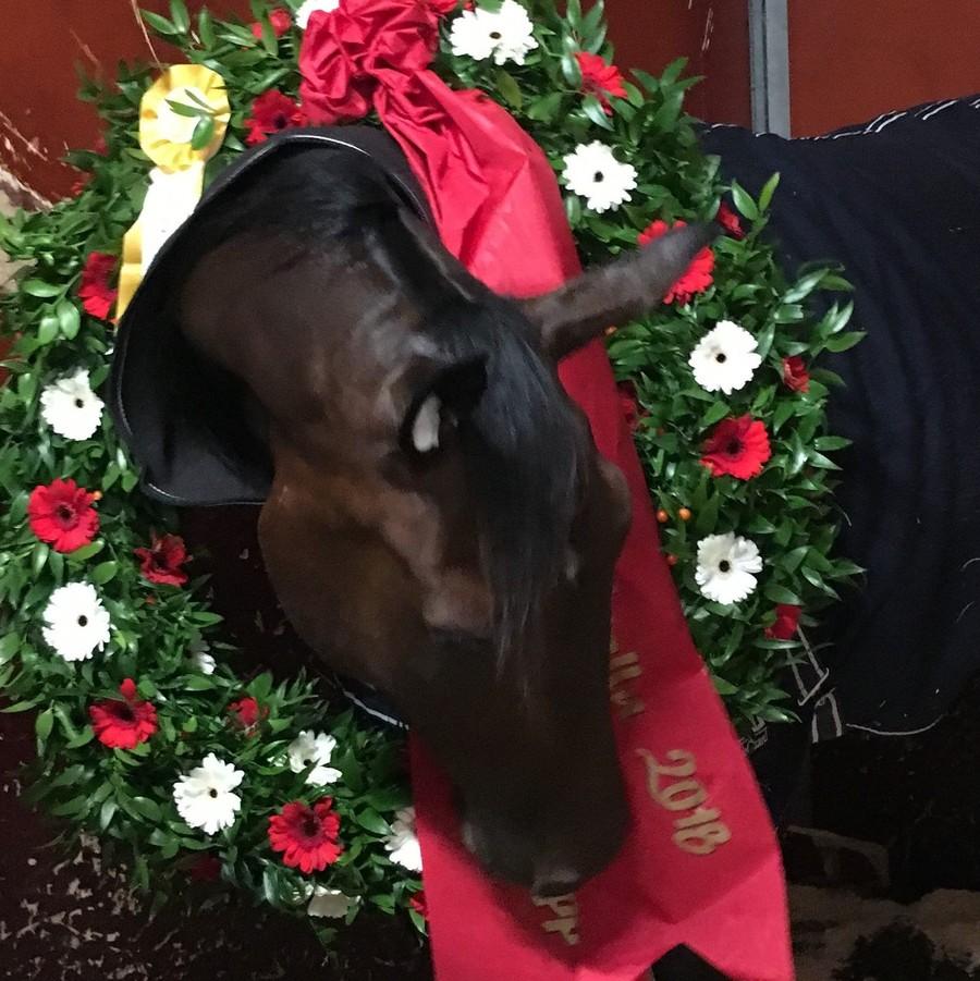 Hästägare och hästar är en mycket viktig del i gemenskapen hos OJA Racing.