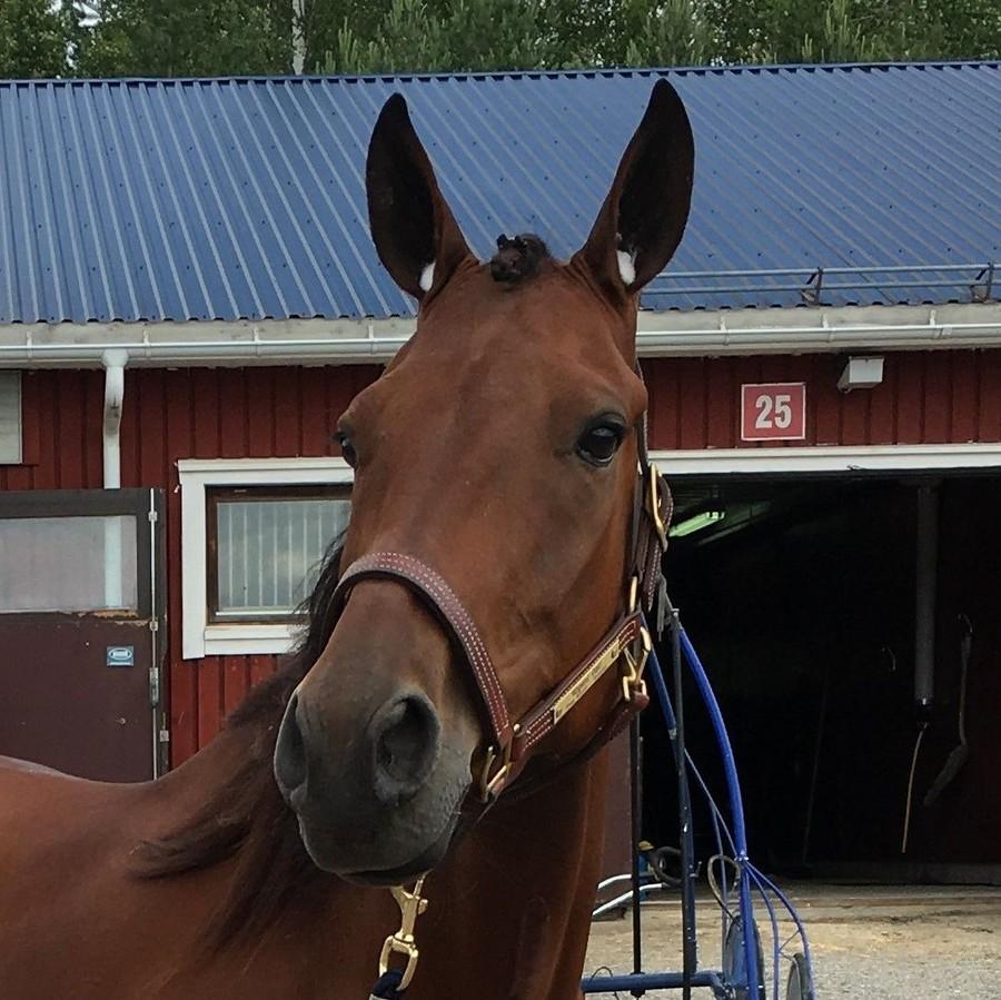 Häst i träning hos travtränare Oskar J Andersson och OJA Racing i Sala.