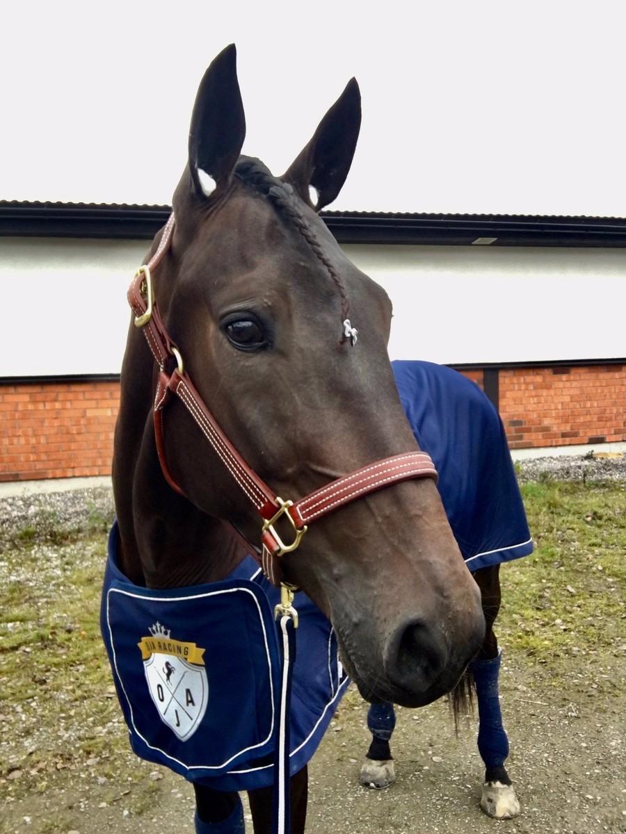 Häst i träning hos travtränare Oskar J Andersson och OJA Racing i Sala. Nya hästägare alltid välkomna!