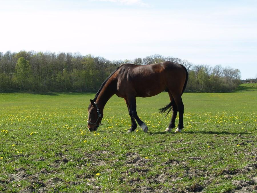 Bokningsförfrågan hästlastbil