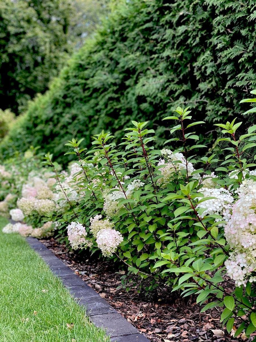 Wägerths trädgårdsdesign  trädgårdsplanering  trädgård plantering lusthus hortensia häck