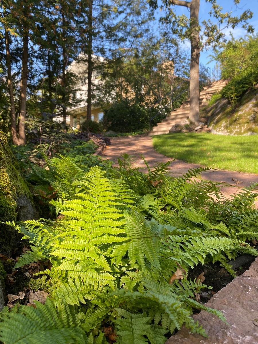 Plantering trädgårdsdesign ormbunke ölandssten trappor