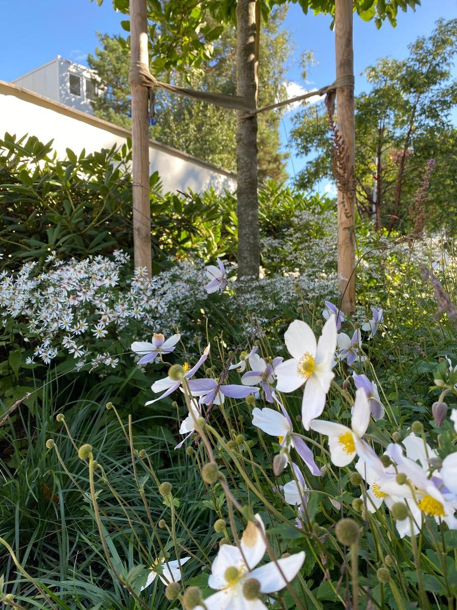 Wägerths trädgårdsdesign trädgårdsarkitekt design trädgård modernt hus naturlig plantering anemone white swan rhododendron