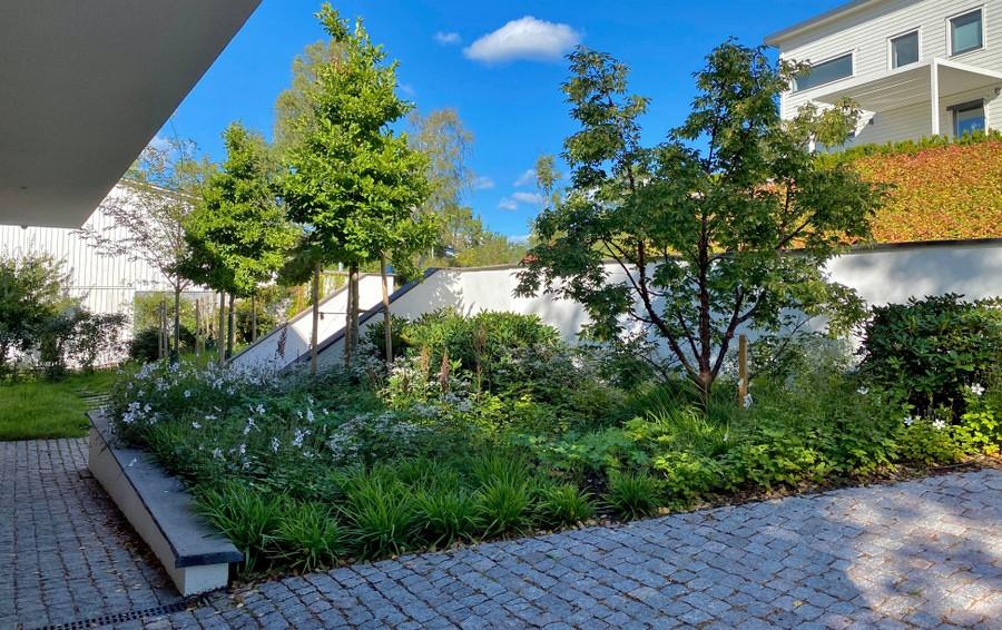 Wägerths trädgårdsdesign trädgårdsarkitekt design trädgård modernt hus naturlig plantering kopparlönn magnolia rhododendron smågatsten