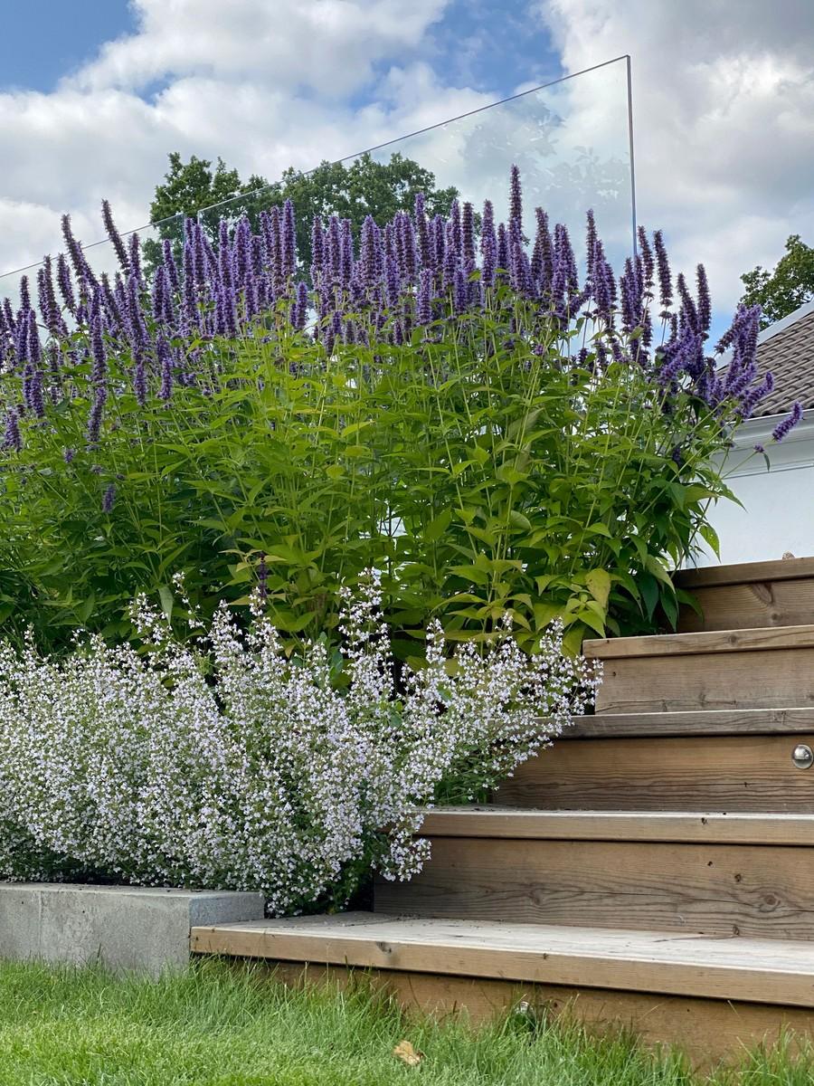 wägerths trädgårdsdesign trädgårdsplanering trädgård träaltan anisop glasräcke